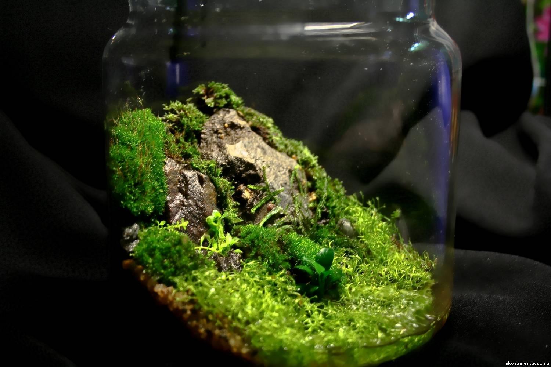 Как вырастить мох в доме 27
