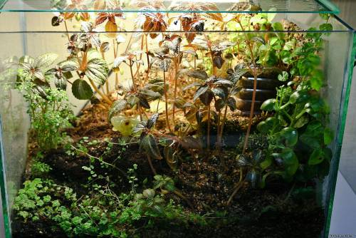 Палюдариум для растений своими руками